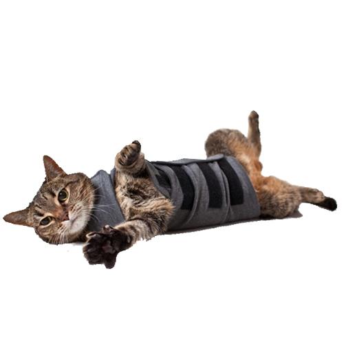 Thundershirt Katze