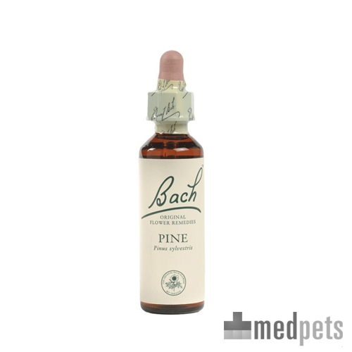 Bachblüten Therapie - Red Chestnut (Rote Kastanie)