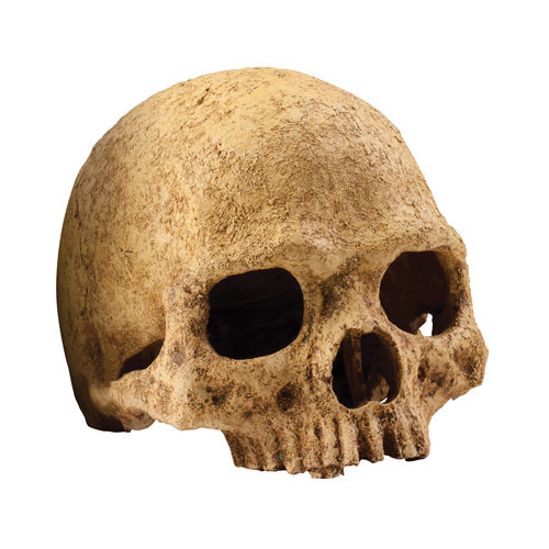 Exo Terra Crâne de Primate