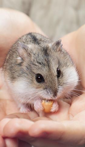 Petit Animal