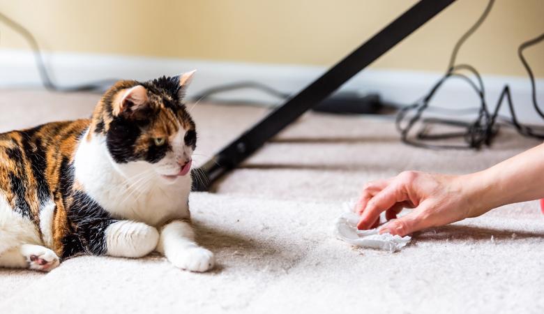Katze auf Teppich