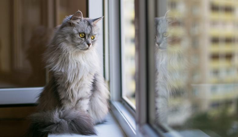 Les fenêtres oscillo-battantes représente un réel danger pour les chats !