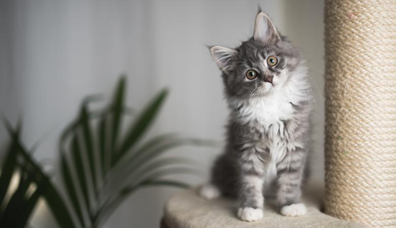 Katze neben Kratzbaum