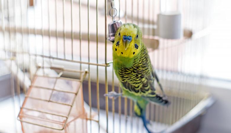 Raclette, Fondue, Pierrade… Une source de danger pour vos oiseaux
