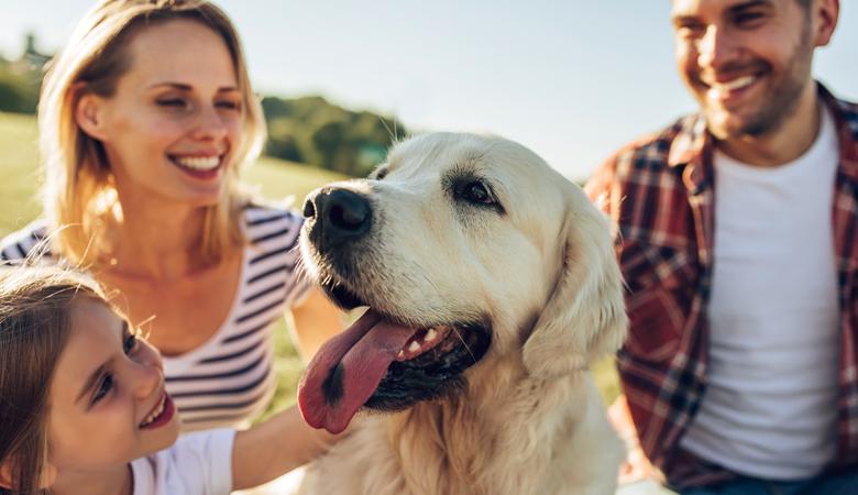 Les animaux de compagnie vous rendent heureux