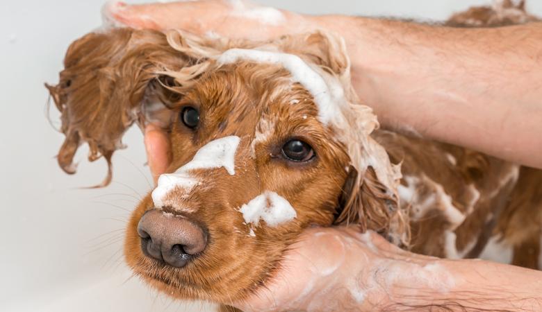 Coronavirus : Laver son chien ou chat