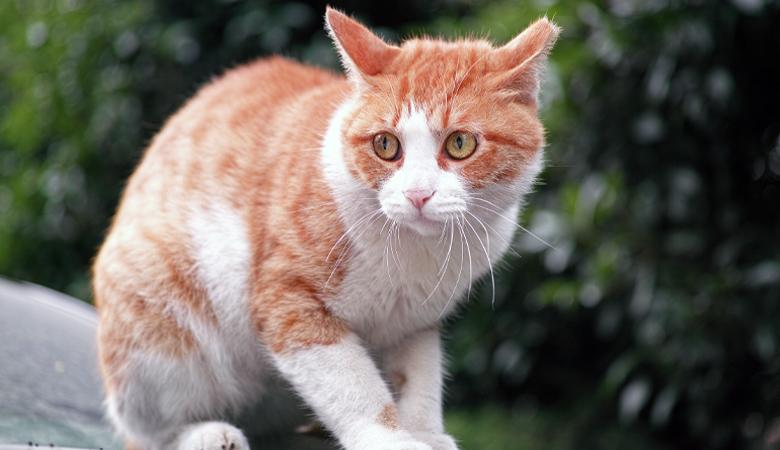 gestresste Katze
