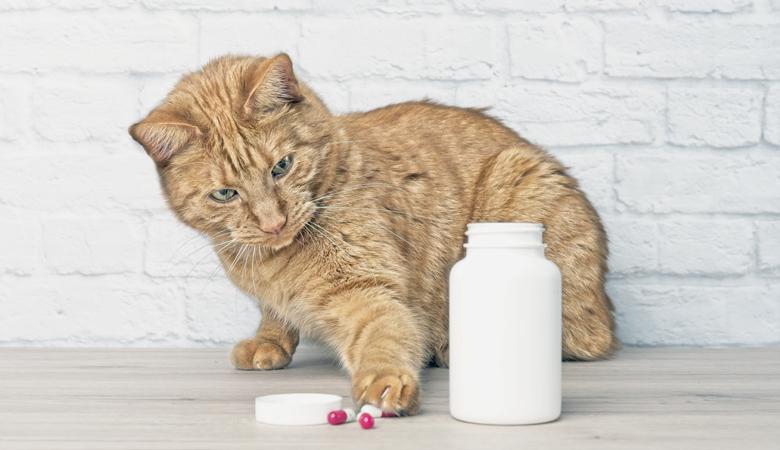 Katze spielt mit Pillen