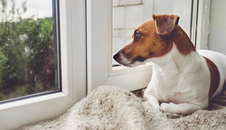 L'anxiété de séparation chez les chiens