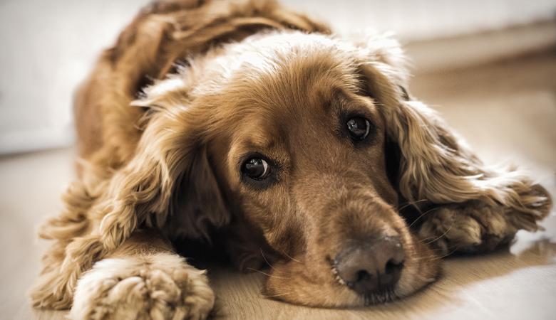 Les aliments et les produits les plus toxiques pour votre animal