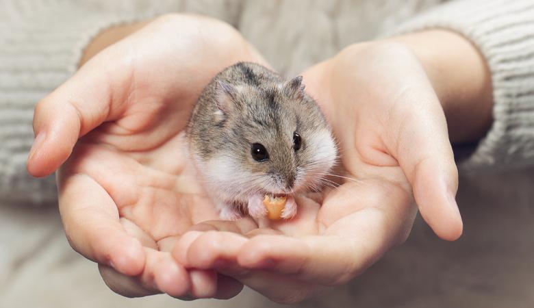 Maus auf Händen