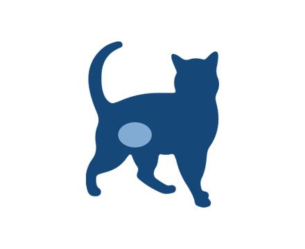 Problèmes de vessie du chat